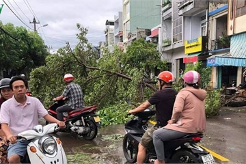 7 tàu hàng tại Bình Định bị đứt neo khi neo đậu tại cảng Quy Nhơn