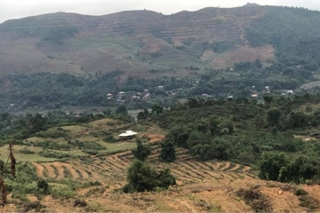 Sơn La: Diện tích trồng cây lâu năm tăng mạnh