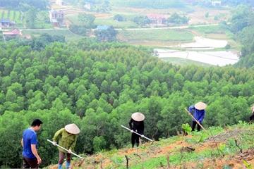 Nông thôn mới: Sơn La trồng được 36.730 ha rừng tập trung