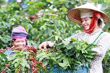 Kết quả thực hiện chương trình Xây dựng nông thôn mới ở Sơn La