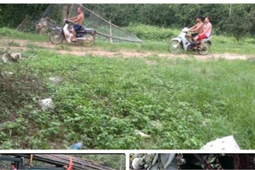 Vụ phá hoại vườn cam Hòa Bình: Chủ vườn tiếp tục kêu cứu