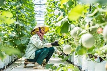 Đã có tiêu chí xác định dự án ứng dụng công nghệ cao trong nông nghiệp