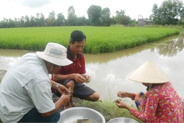 Bạc Liêu tổ chức lại sản xuất nông nghiệp phù hợp biến đổi khí hậu