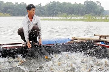 Hà Nội đứng đầu cả nước về quản lý an toàn thực phẩm nông lâm thủy sản