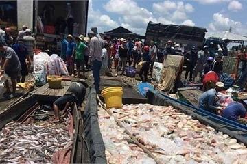 Cá chết trắng trên sông La Ngà ngày càng tăng, hiện đã lên tới gần 1000 tấn