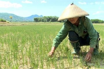 Hơn 30 triệu USD hỗ trợ Việt Nam tăng cường chống biến đổi khí hậu
