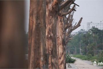 Hà Nội: Xót xa hàng sấu chết khô trên đường Sa Đôi