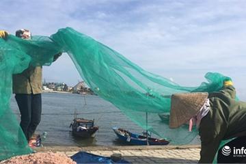 Quảng Bình: Ruốc biển vào gần bờ, ngư dân xúc mệt nghỉ, kiếm 10 triệu đồng/đêm