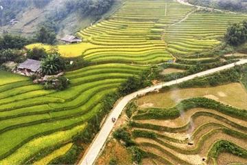 Tháng 9 về, người người lên Sa Pa ngắm lúa vàng đẹp mê hoặc