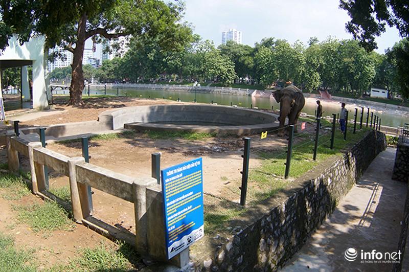 Tháo xích cho voi vườn thú Hà Nội - ảnh 1