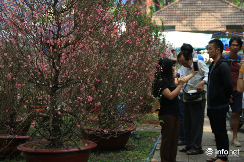 Thiếu nữ thướt tha bên hoa đào trong nắng phương Nam - ảnh 13