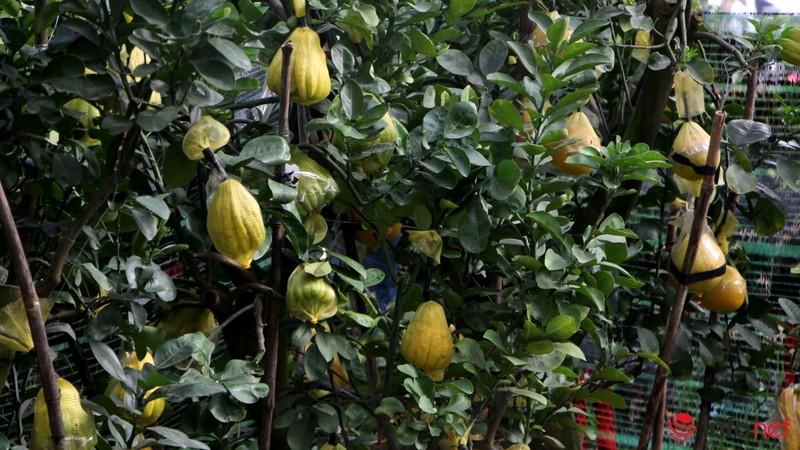 Hoa đào khoe sắc trong nắng phương Nam - ảnh 23