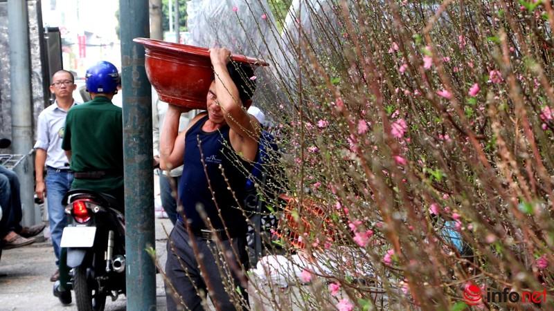 Hoa đào khoe sắc trong nắng phương Nam - ảnh 5