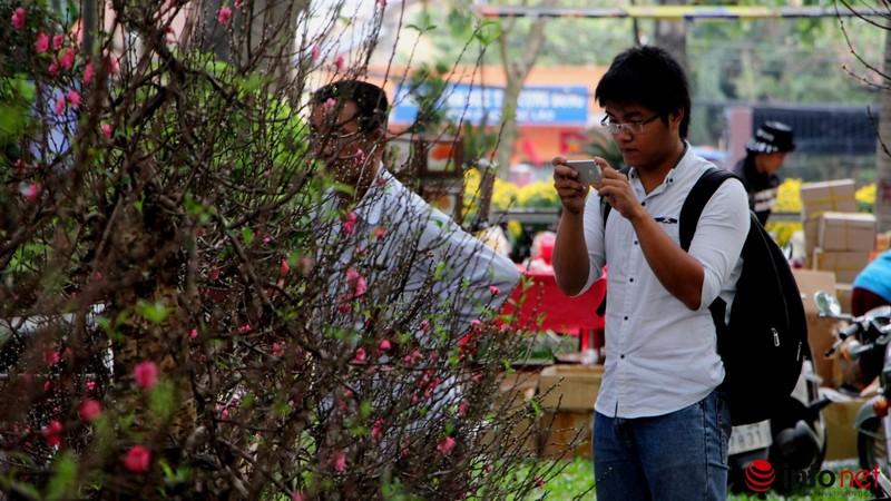 Hoa đào khoe sắc trong nắng phương Nam - ảnh 17