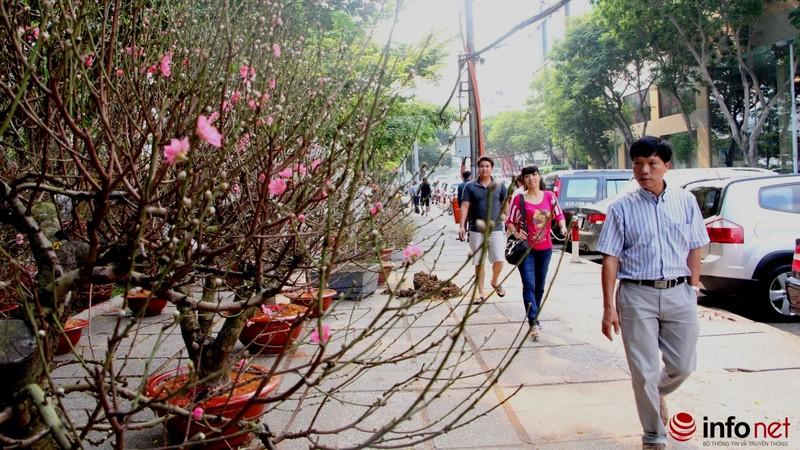Hoa đào khoe sắc trong nắng phương Nam - ảnh 18