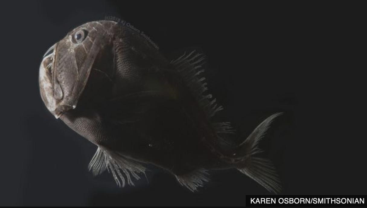Giải mã bí ẩn: Loài cá đen bậc nhất hành tinh, vẻ ngoài tăm tối đến mức không thể chụp ảnh cuối cùng đã có thể giải thích - Ảnh 3.