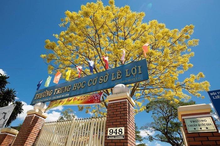 Cây phượng báo hiệu mùa hè của học trò ra hoa giữa đông, lại có màu vàng độc lạ, không ai nỡ quét đi vì đẹp quá - Ảnh 3.