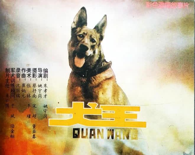 Phim Trung bị tẩy chay vì cho nổ chết thật chú chó vai chính, đạo diễn còn tiết lộ cách để giảm thiểu cơn đau - Ảnh 1.