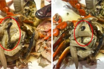 """Bỏ hơn 1 triệu ăn buffet hải sản ở nhà hàng nổi tiếng Hà Nội, thực khách bất ngờ phát hiện """"cua có giun"""""""