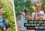 Mục sở thị bất động sản chục ngàn mét vuông của sao Việt: Toàn để trồng rau nuôi cá