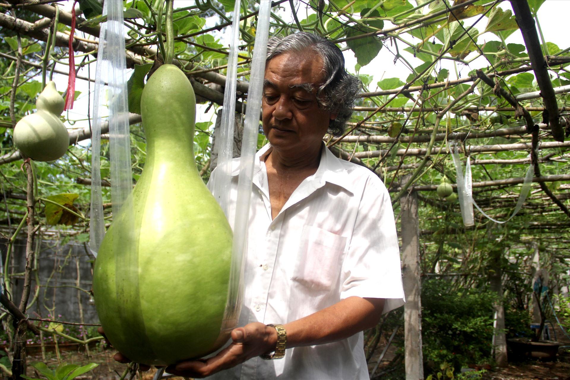 Hỏi về hạt giống, ông Tài cho biết, vô tình ông phát hiện trên bàn thờ có trái bầu khô. Sau đó, ông lấy hạt rồi gieo trong vườn nhà. Ít lâu sau, bầu nảy mầm phát triển xanh tốt và bắt đầu ra trái.
