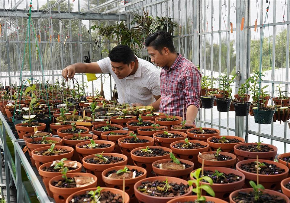 Anh Lê Thành Giang (áo trắng) và anh Trương Minh Hùng đang chăm sóc vườn lan đột biến. Ảnh: TR.L.
