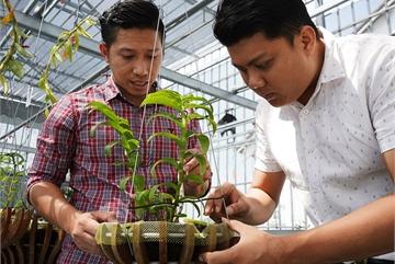 Choáng ngợp trước vườn lan đột biến 80 tỷ ở Cần Thơ