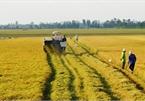Điều kiện chuyển từ đất nông nghiệp sang đất ở năm 2021