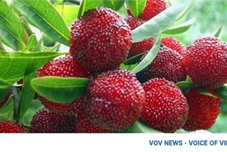 Expensive foreign fruit proves popular in Vietnamese market