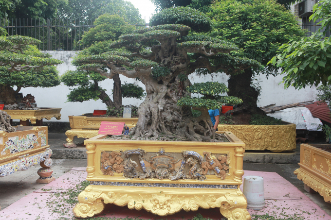 """Trong suốt 25 năm sưu tầm, chơi cây cảnh, bỏ ra hàng trăm tỷ đồng, đến nay vườn cây Di sản có khoảng 40 cây thương hiệu, thuộc hàng quý hiếm và hàng trăm cây hoàn thiện. Nằm giữa khuôn viên vườn là 2 tác phẩm sanh cổ giá trị nhất Việt Nam, đó là """"Tiên lão giáng trần"""" và """"Ngọa hổ tàng long"""" có giá trị vài triệu USD."""