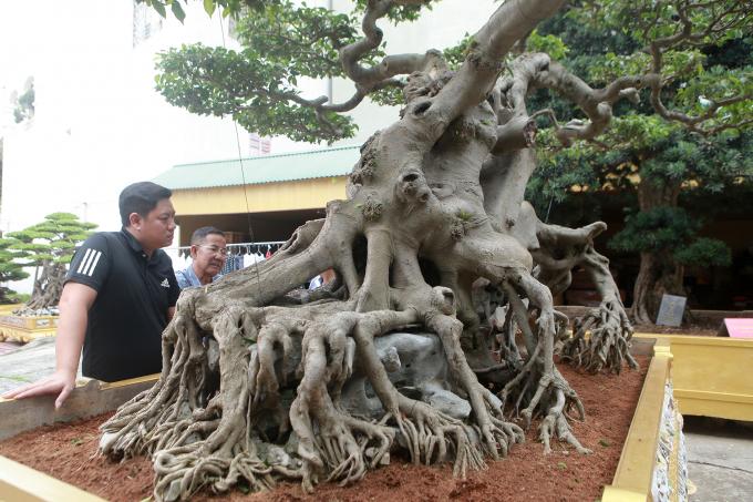 """Tác phẩm sanh """"Ngọa hổ tàng long"""", đầu hổ mình rồng được khách người Đài Loan trả 1,4 triệu USD nhưng ông Toàn không bán. Bà Ngô Thị Thu (vợ ông Toàn) cho biết, cách đây hơn chục năm, bà ôm 5 tỷ đồng giấu chồng, bắt taxi đi vào vùng núi ở Tuyên Quang mua cây sanh quý này."""