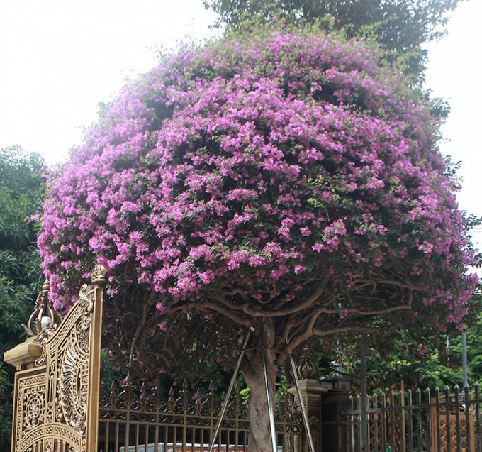 """Ngay trước cổng vườn cây Di sản là tác phẩm hoa giấy có tên """"vạn hoa lầu"""" có giá 2 tỷ đồng. Đây là tác phẩm hoa giấy đẹp nhất Việt Nam."""