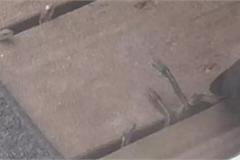 Dồn hết tiền mua ngôi nhà mơ ước, cặp vợ chồng tái mặt phát hiện hàng trăm con rắn dưới nền nhà