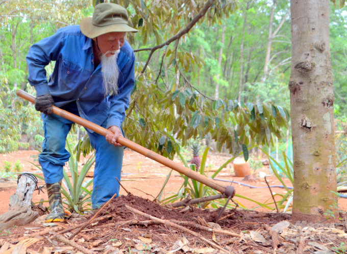 Vườn cây ăn quả do tự tay cụ trồng, chăm sóc, góp phần cải thiện kinh tế. Ảnh: Trần Trung.