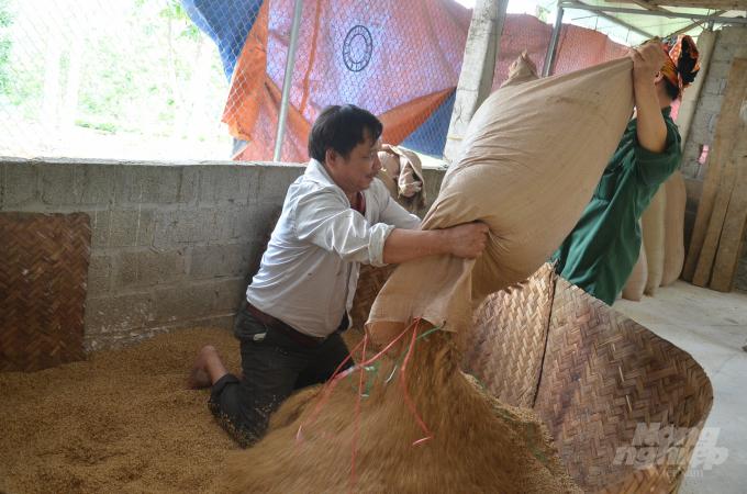 Vợ chồng anh Thanh đang trải trấu để lót chỗ úm gà. Ảnh: Dương Đình Tường.