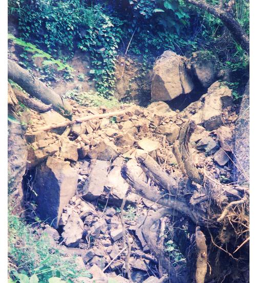 Một gốc cây lớn cũng đã được đào bật góc để mở lối đào hầm khác. Ảnh: T.P.