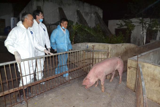 Thứ trưởng Phùng Đức Tiến trực tiếp cùng đoàn công tác kiểm tra lô lợn sống nhập khẩu vào phía Nam. Ảnh: Trần Trung.