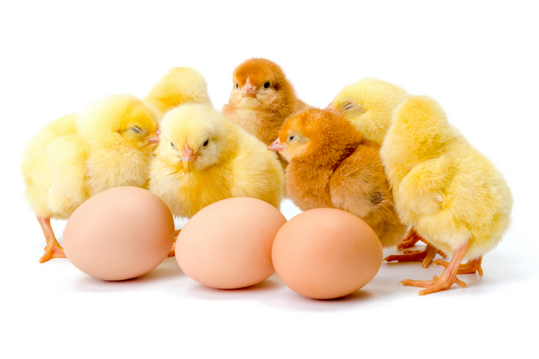 Theo các nhà thiên văn học và vật lý học, việc đặt quả trứng thẳng đứng không liên quan gì đến thời gian, mà liên quan đến cơ học. Điều quan trọng nhất là di chuyển trọng tâm của quả trứng sao cho cân bằng và với mẹo này bạn sẽ đợi tới lúc phần lòng đỏ chìm xuống hết mức có thể là được. Lời khuyên là bạn nên chọn quả trứng khoảng 4, 5 ngày tuổi.