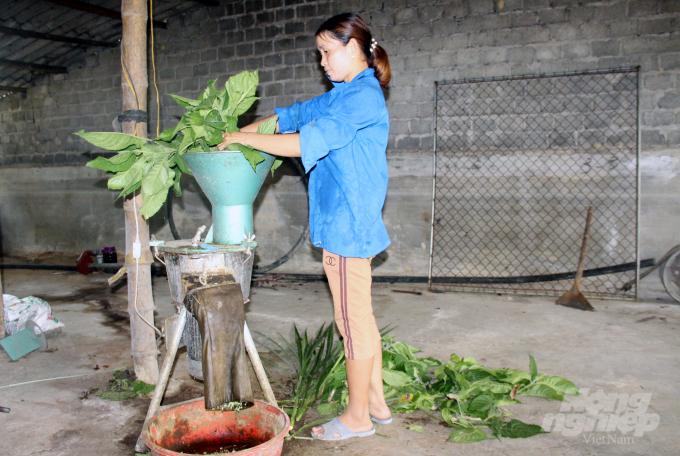 Thức ăn xanh được xay nhuyễn, trộn với cám gạo, bã sắn và ủ bằng men vi sinh trong vòng 12 giờ trước lúc hòa với nước cho lợn ăn. Ảnh: Việt Khánh.