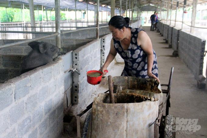 Mỗi ngày, lợn sẽ được cho ăn ba lần bằng hỗn hợp nước, thức ăn xanh xay nhuyễn, cám gạo được ủ với men vi sinh trong vòng 12 giờ. Ảnh: Việt Khánh.