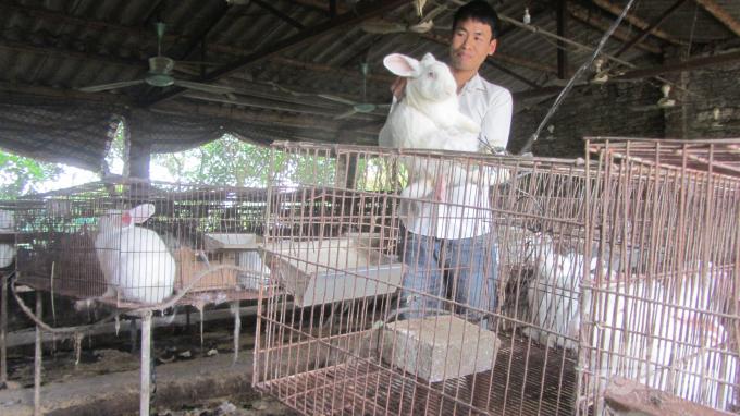 Chủ trang trại nuôi thỏ quy mô 3.000 con Lê Quang Hãnh. Ảnh: Hải Tiến.