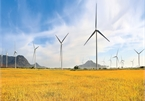 Vietnam wind power sector to see growing opportunities: Fitch Solutions