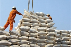 Improved quality and higher demand boost Vietnam rice export outlook