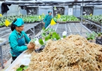 Hanoi removes barriers to investment in high-tech agriculture