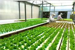 More efforts needed to attract FDI into hi-tech farming