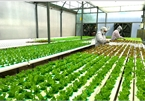 More efforts needed to attract FDI into hi-tech farming