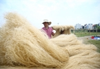 Exploring prolific vermicelli production in Hanoi's ancient village
