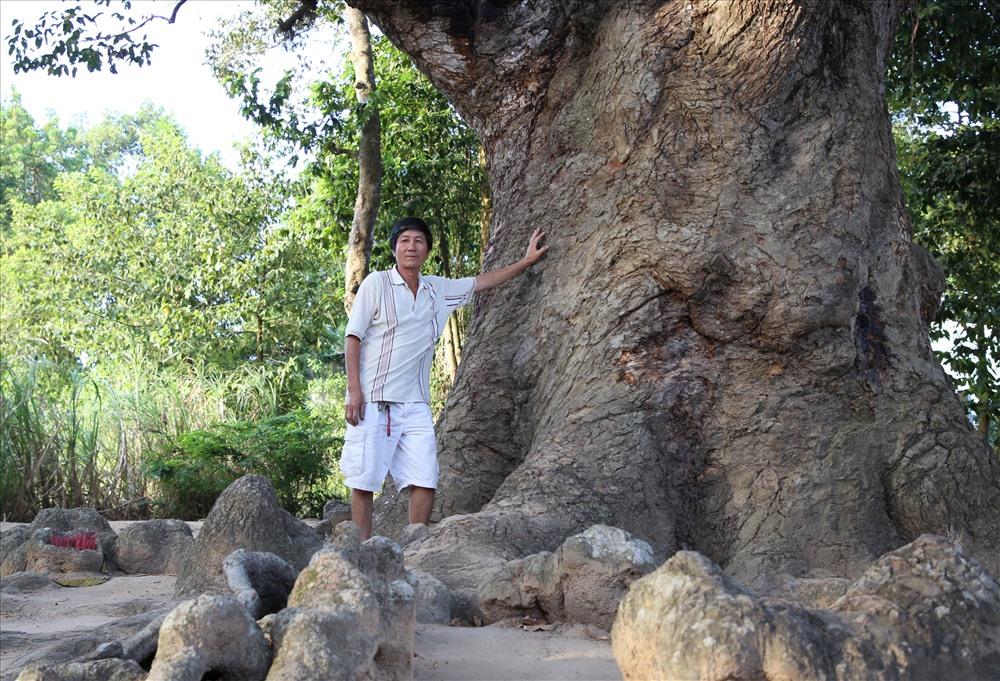 """Thân cây dầu """"dù"""" xù xì, 10 người ôm không xuể. Cây có nhiều năm tuổi nên rễ cây trồi lên mặt đất, tạo thành hình dáng kỳ lạ. Ảnh: H.T."""