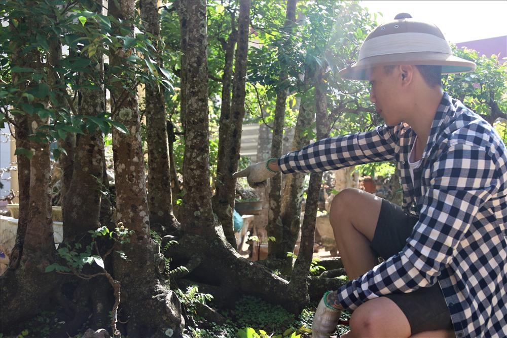 ''Nói cây khế 19 thân cực kỳ hiếm gặp bởi vì các cầu nối rễ của cây dính liền nhau chứng tỏ nó không phải là cây ghép. Thân của nó dài và thẳng, sinh trưởng tự nhiên, đồng đều. Ở Việt Nam này rất khó để tìm được cây thứ hai đẹp như thế này. Hiện đã có khách sẵng sàng trả đến hơn 300 triệu để 'rước' nó về nhưng tôi vẫn lắc đầu từ chối.'', anh Sanh cho hay.