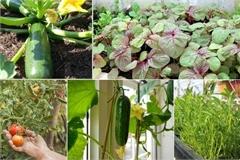 Nhận biết một số loại rau ngon, sạch mùa hè